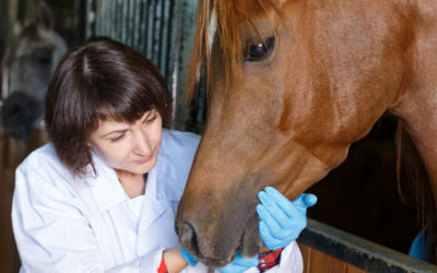 About Equine Dental Exams – thehorse.com